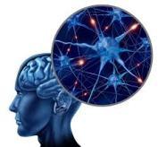 Brain neuroplasty two